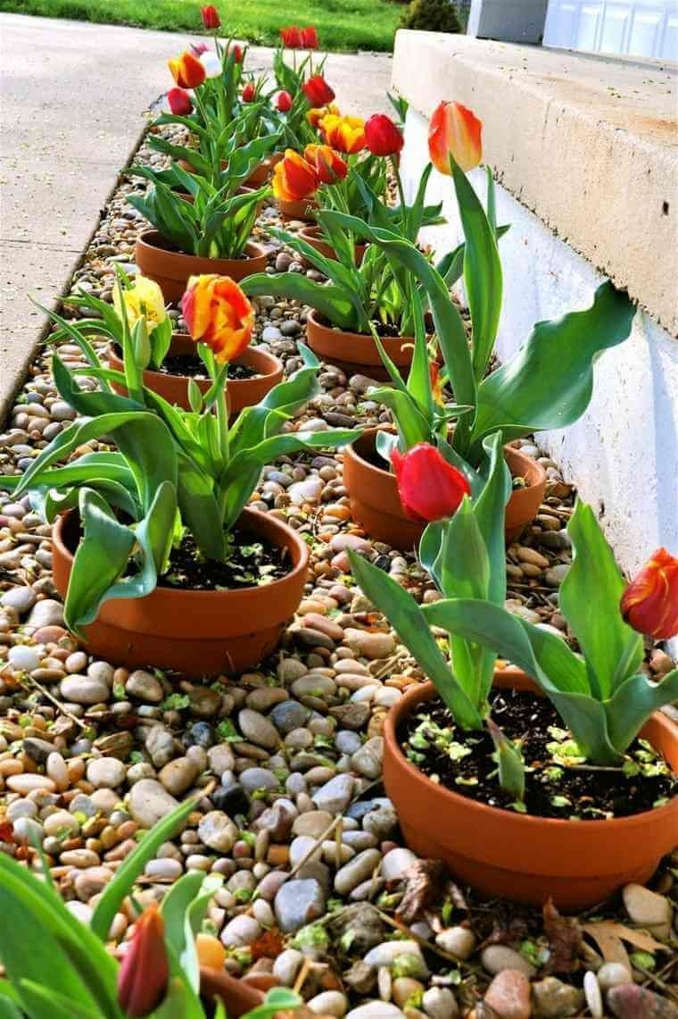 Cheap Front Yard Landscaping Ideas That Will Inspire 10