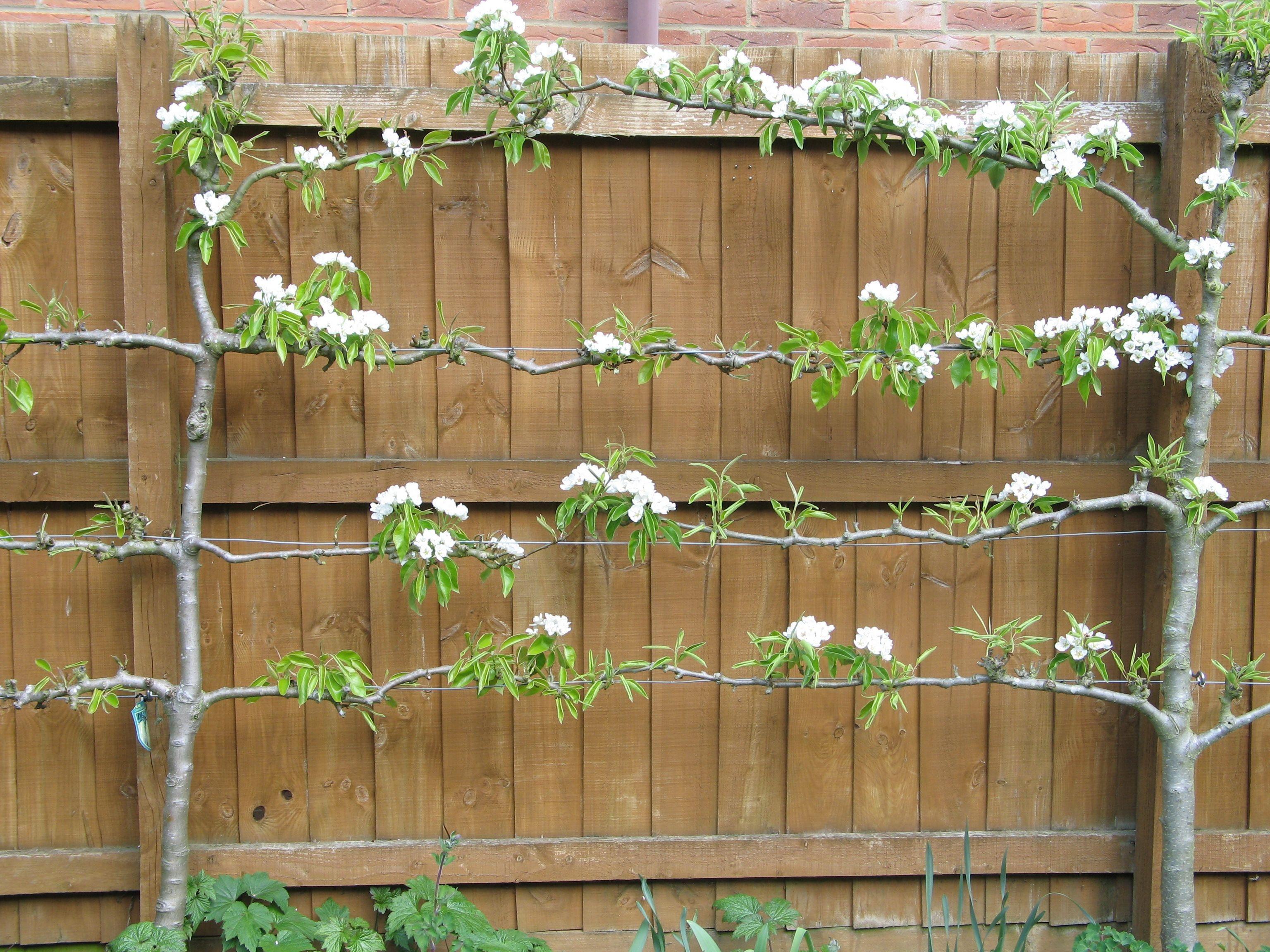 Relaxing Small Garden Design Ideas 21