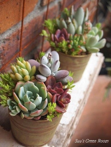 Awesome Succulent Garden Ideas For 2018 21