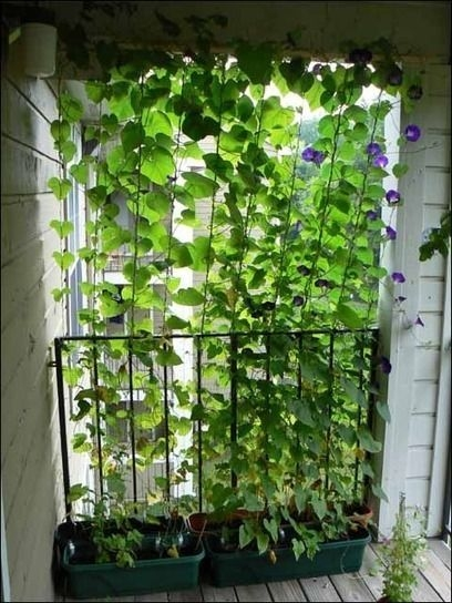Awesome Balcony Tips For Perfect Balcony Ideas 39