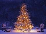 Easy Christmas Tree Decor With Lighting Ideas 25