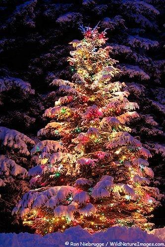 Elegant Christmas Lights Decor For Backyard Ideas 09