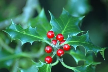 Pretty Colorful Winter Plants And Christmas For Frontyard Decoration Ideas 23
