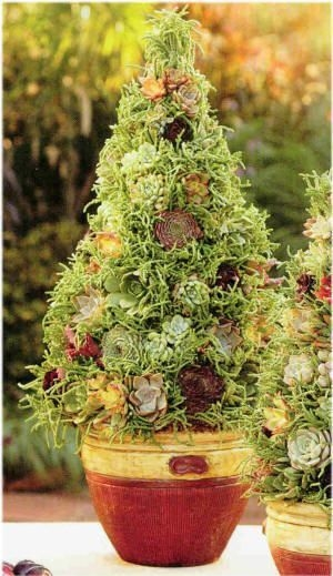 Pretty Colorful Winter Plants And Christmas For Frontyard Decoration Ideas 28