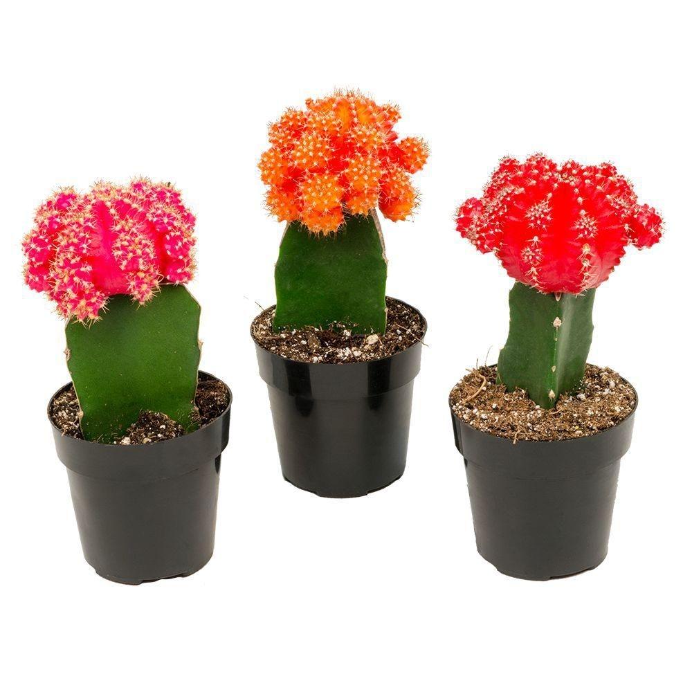 Wonderful Cactus Centerpieces Ideas28