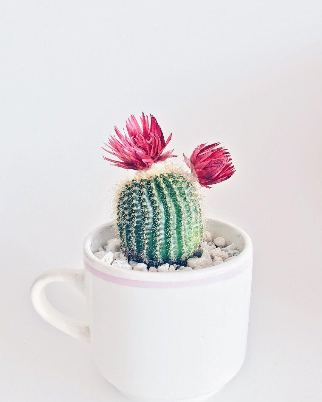 Wonderful Cactus Centerpieces Ideas32