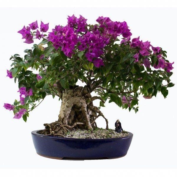 Brilliant Bonsai Plant Design Ideas For Garden09