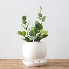 Brilliant Bonsai Plant Design Ideas For Garden19