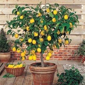 Brilliant Bonsai Plant Design Ideas For Garden21