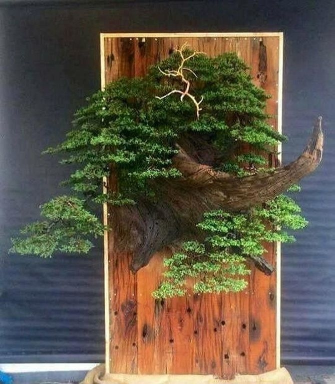Brilliant Bonsai Plant Design Ideas For Garden35