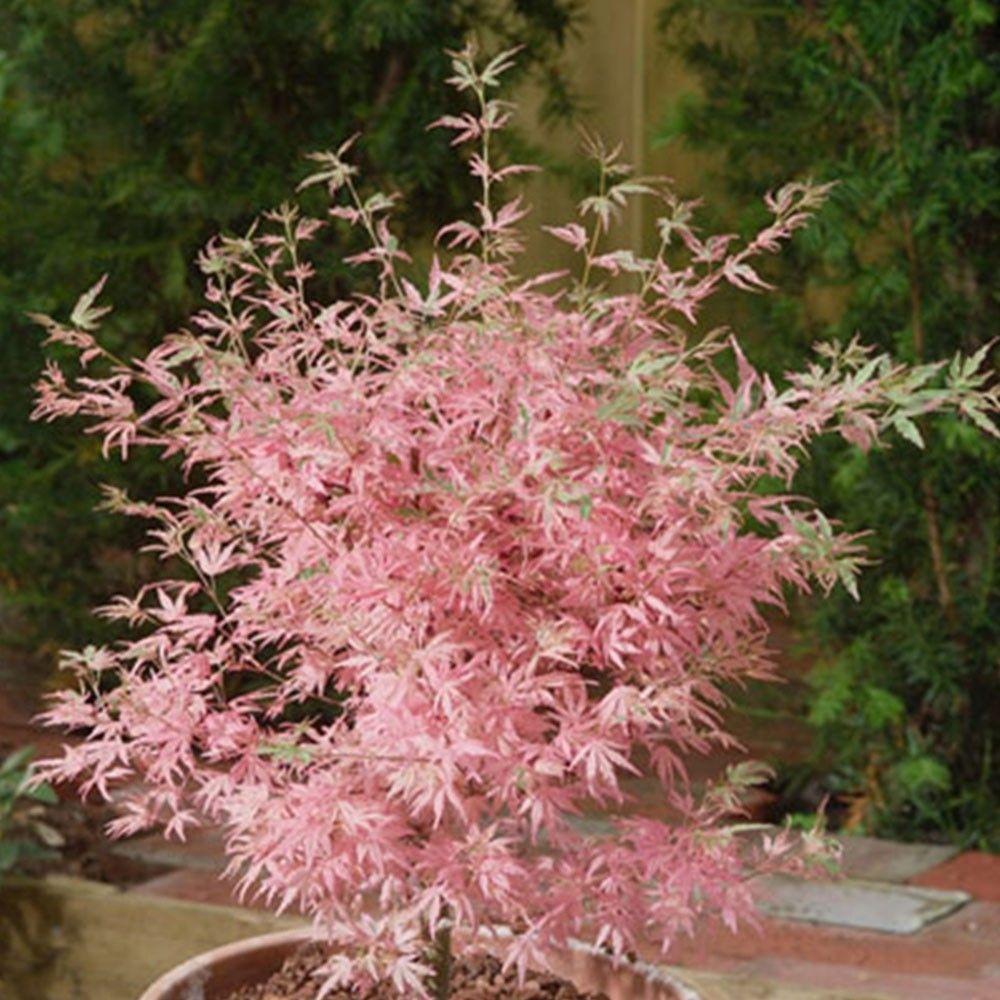 Minimalist Japanese Garden Ideas06
