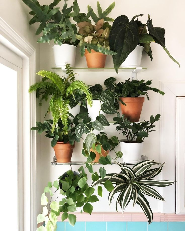 Simple Wall Plants Decorating Ideas11