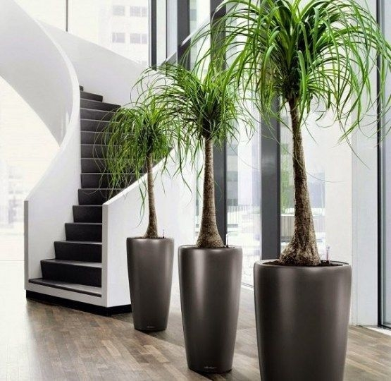 Simple Wall Plants Decorating Ideas15