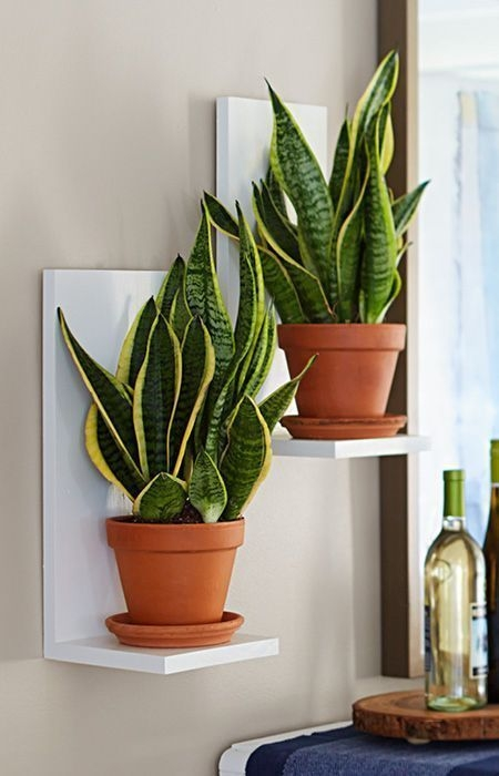 Simple Wall Plants Decorating Ideas16