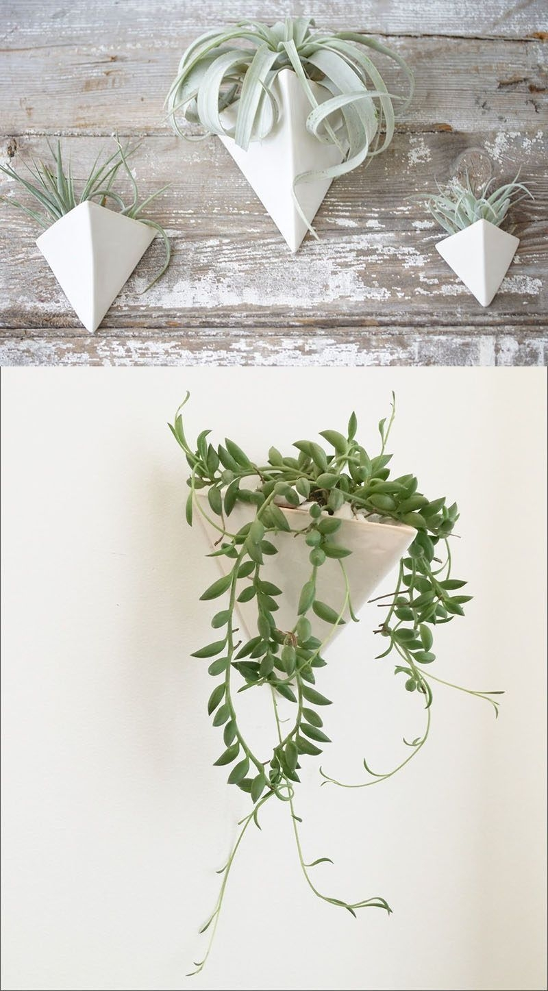 Simple Wall Plants Decorating Ideas35