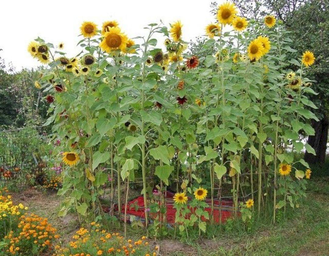 Elegant Play Garden Design Ideas For Kids19