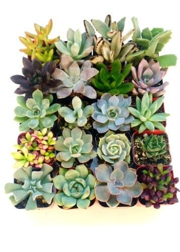 Simple Small Flower Gardens And Plants Ideas36