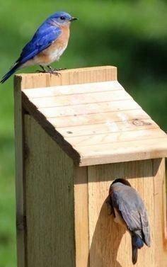 Elegant Bird House Ideas For Your Backyard Space08